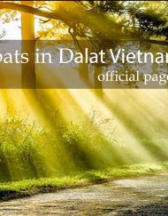 Expats in DaLat Vietnam - Official page